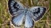 Коллекционера впервые признали виновным в убийстве бабочки