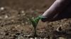 Доказано учёными: картошку можно вырастить на Марсе
