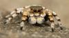 Ученые: Человечество может быть съедено пауками за год