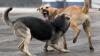 Бродячие собаки держат в страхе жителей Кагула