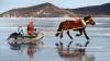 Народ отдаёт последнее: жители Монголии жертвуют деньги и скот на спасение экономики
