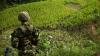 Рекордные плантации коки зафиксированы в Колумбии