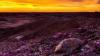 Видео: Пустыня расцвела впервые за 20 лет в Калифорнии