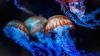 Видео: Breitling украсил стенд на BaselWorld живыми медузами