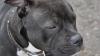 Собака загрызла хозяина во время съемок телепрограммы BBC