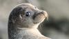 Видео: Тюлень приплыл в Мельбурн на корабле