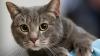В Мадриде волонтеры берут кошек под опеку