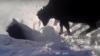"""Оптическая иллюзия: в Казахстане сняли на видео """"исчезающих"""" в снегу коров"""