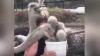 """Видео: Голодные страусы """"заклевали"""" туристку на птицеферме в ЮАР"""