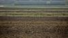 Специалисты НАПБ обнаружили контрафактные семена и пестициды