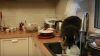 """Енот пробрался на кухню и """"перемыл"""" гору грязной посуды"""