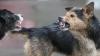 В Кагуле на десятилетнюю девочку напала свора бродячих собак