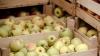 В Рышканском районе построят современный сельскохозяйственный рынок