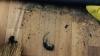 В группе столичного детского сада №16 среди игрушек обнаружили крысиный яд