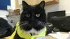Вокзальная кошка втрое увеличила продажи английского журнала