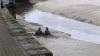 Пожарные спасли пьяных британцев, увязших в иле