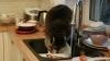 Видео: Толстый енот-полоскун забрался на кухню и перемыл гору грязной посуды