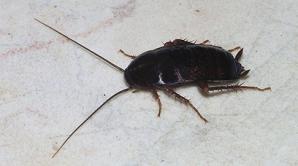 Житель Австрии пришел в суд с пакетом тараканов