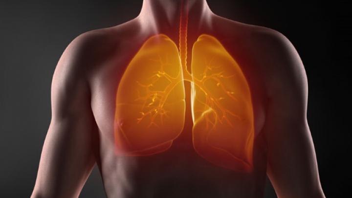 Ученые обнаружили новую функцию легких