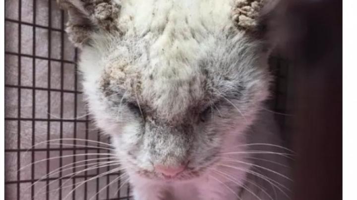 Ветеринары вернули коту зрение и были поражены красотой его глаз