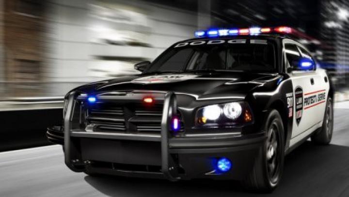 Автолюбительница, игравшая с щенком, врезалась в машину шефа полиции
