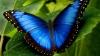В США учитель вместо бабочек показал детям лесбиянок