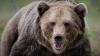 Под Оренбургом заметили медведя, гулявшего ночью в парке