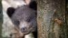 Полицейские нашли на дороге двух медвежат в картонной коробке