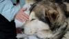 Ученые: домашние животные защитят детей от ожирения и аллергии