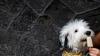 В Италии начали продажу собачьего мороженого