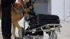 Труп россиянки в чемодане нашли в итальянском Римини