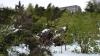Ботанический сад закрыт для посещений: 80% деревьев уничтожил снегопад