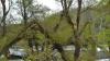 Страшный ущерб непогода нанесла зоопарку, Ботаническому саду и другим столичным паркам