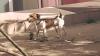 Собака поспешила на помощь в уборке города
