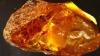 В янтаре нашли кровь предка человека