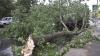 Работника столичной школы убило деревом, которое пытались спилить