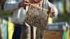 В этом году мёд может подорожать: пчеловоды потеряли 50% пчелиных семей