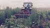 Фермеры, понесшие убытки в результате непогоды, получат страховые компенсации