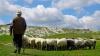 Таджикистан обвинил узбекских пограничников в убийстве пастуха