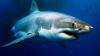 Австралиец чудом выжил после нападения акулы на байдарку