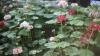 Столичному Ботаническому саду требуются работники