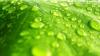 """Ученые: растения находят воду """"на слух"""""""