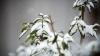 Фермеры подсчитывают убытки от снегопадов и заморозком