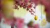 Христос воскрес! Православные отмечают праздник Светлой Пасхи