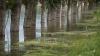 Новая угроза наводнения: уровень воды в озере в Гратиештах резко вырос