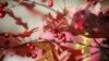 Экспорт молдавских ягод увеличивается ежегодно примерно на 7%