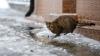 На Урале спасли кошку, которая на три дня застряла на телеграфном столбе