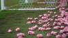 Английские футбольные фанаты забросали поле игрушечными свиньями в знак протеста
