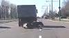 Видео: Корова выпала из грузовика в Минске