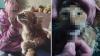 На девушку завелм уголовное дело за фотосессию с умирающим котом
